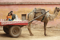 couple on camel cart - Vivek Sharma