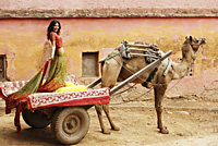 woman in sari standing on camel cart - Vivek Sharma