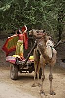 young woman in sari, posing on camel cart - Alex Mares-Manton