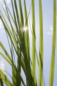 Plant with sunlight coming through - Yukmin