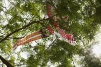 Chinese kite caught in tree - Yukmin