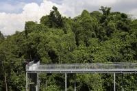 Man on canopy walk among the trees - Yukmin