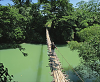 Hanging bridge at Bohol, Philippines - OTHK