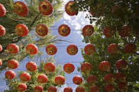 Red lanterns hanging in the Park of Wine Spring, Jiuquan, China - OTHK