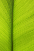 Close up of palm leaf - Yukmin