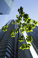 Green tree growing among sky scrapers - Yukmin