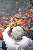 Top view of old man feeding Koi fish - Yukmin