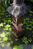 thatched light in lilly pond - Alex Mares-Manton