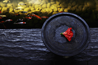 wooden bowl with red flower near fish pond - Alex Mares-Manton