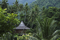 thatched house surrounded by tropical trees - Alex Mares-Manton