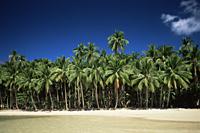 Philippines,Palawan,Bascuit Bay,El Nido,Beach Scene - Travelasia