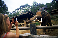 Thailand,Chiang Mai,Mae Sa Elephant Camp,Tourists Taking Photos of Elephant - Travelasia