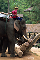 Thailand,Chiang Mai,Mae Sa Elephant Camp,Elephant Show - Travelasia