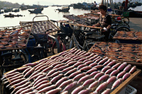 China,Hong Kong,Cheung Chau Island,Drying Fish - Travelasia