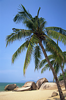 China,Hainan Island,Sanya,Beach Scene at Tianya-Haijiao Tourist Zone - Travelasia