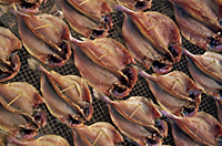 China,Hong Kong,Cheung Chau Island,Drying Fish - Travelasia