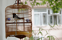 Wicker bird cage with bird hanging outside house - Alex Mares-Manton
