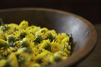 yellow chrysanthemum flowers in wooden bowl - Alex Mares-Manton