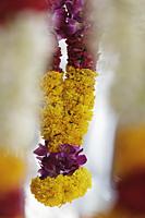Hanging flower garland - Alex Mares-Manton