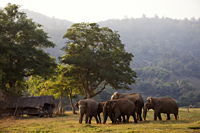 Thailand,Golden Triangle,Chiang Mai,Elephants - Travelasia