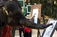 Thailand,Chiang Mai,Elephant Camp,Elephant Show,Elephant Painting - Travelasia