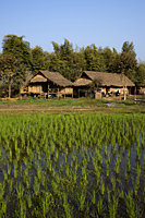Thailand,Golden Triangle,Rice Field and Farmhouse - Travelasia