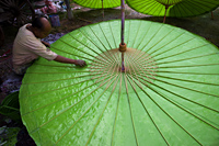 Thailand,Chiang Mai,Umbrella Making at Borsang Village - Travelasia