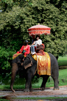 Tourist riding an elephant in Thailand - Alex Mares-Manton