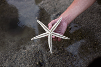 hand holding star fish on black sand - Yukmin