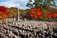 Arashiyama,Adashino Nembutsu-ji Temple, Autumn leaves in background. Kyoto, Japan - Travelasia