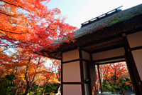 Arashiyama,Jojakkoji Temple surrounded by Autumn leaves. - Travelasia