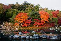 Arashiyama,Tenryuji Temple, Autumn Leaves in the Landscape Garden. Kyoto, Japan - Travelasia