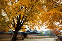 Gyeongbokgung Palace with Autumn leaves. Seoul, Korea - Travelasia
