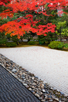 Kennin-ji Zen Temple,Zen Garden and Autumn Leaves. Kyoto, Japan - Travelasia