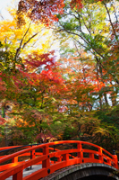 Red bridge at Kitano Temmangu Shrine, Autumn Leaves in the Maple Garden. Kyoto, Japan - Travelasia