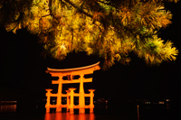 Miyajima Island, Itsukushima Shrine, Torii Gate at night. Japan - Travelasia