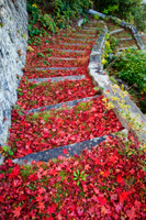 Stone steps covered with red Autumn leaves. Miyajima Island, Omoto Park. Japan - Travelasia