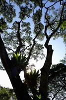 Ferns growing on large tree with sun burst - Yukmin