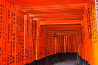 Fushimi Inari Taisha Shrine,Tunnel of Torii Gates. Kyoto, Japan - Travelasia