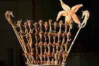 China,Beijing,Wangfujing Street,Snack Street Market selling Scorpians and Starfish - Travelasia