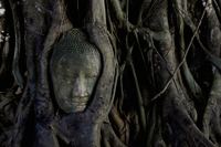 Stone Buddha head surrounded by roots of Banyan tree at Ayutthaya, Thailand - Alex Mares-Manton