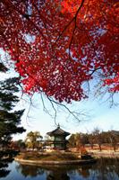 Gyeongbokgung Palace,Hyangwonjeong Pavilion, Seoul, Korea - Travelasia