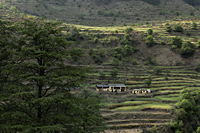 Terraced land with farm house, Himalayan foothills, India - Alex Mares-Manton