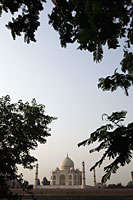 View of the Taj Mahal with trees in foreground, Agra, India - Alex Mares-Manton