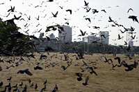 Birds flying on a beach in Mumbai, India - Yukmin