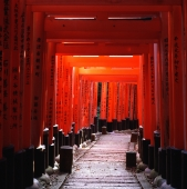 Japan, Kyoto, Fushimi-inari shrine, thousands of red torii gates - Rex Butcher