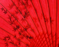 Japan, red umbrella with shadow of maple leaves - Rex Butcher