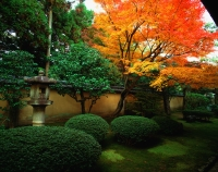 Japan, Kyoto, Kohrin-in, Daitoku-ji sub-temple, garden with maple - Rex Butcher