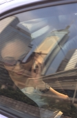 Female executive with sunglasses using cellular phone in car, skyline reflecting in window - Jade Lee
