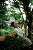 Indonesia, Sumatra, Aceh, Muslim man plucks spice from tree. - Steve Raymer